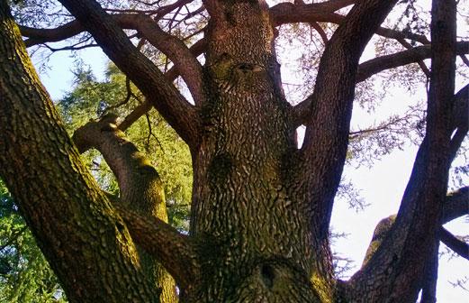 Élagage d'un arbre