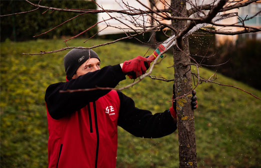 Coupe de branches